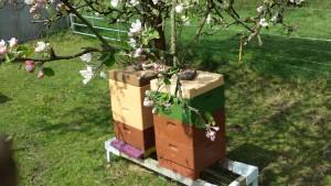 Stand in der Obstblüte